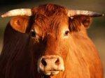 «Незаконное проникновение» быка на территорию Константиновского дворца