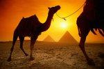 В Петербурге прекращена продажа туров в Египет
