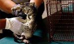 Конкурс на право ловить кошек