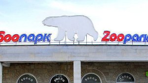 Обсуждение нового зоопарка в Петербурге