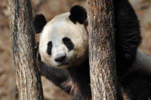 В Смольном подсчитали результаты опроса жителей Санкт-Петербурга о будущем зоопарке