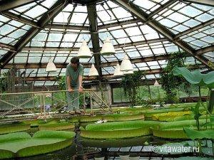 Петербург открыл Ботанический сад