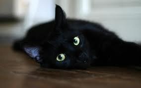 Помимо Эрмитажных котов в Петербурге раздадут черных котов из приютов