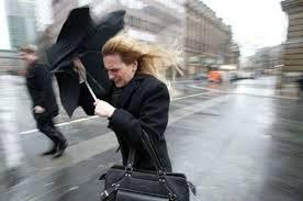 Ветер опрокинул дерево на жительницу Санкт-Петербурга