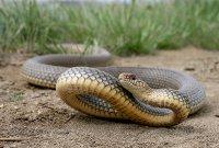 В Петербурге змея пробралась в квартиру через канализационную трубу