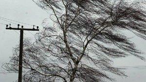 За прошедшие сутки петербургские спасатели совершили свыше 40 выездов