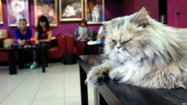 В «Республике кошек» поселят 60 котов