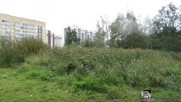 В Выборгском районе планируется благоустройство территорий вокруг Суздальских озер